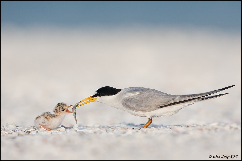 Photograph Dinner Time by Don Lacy on 500px
