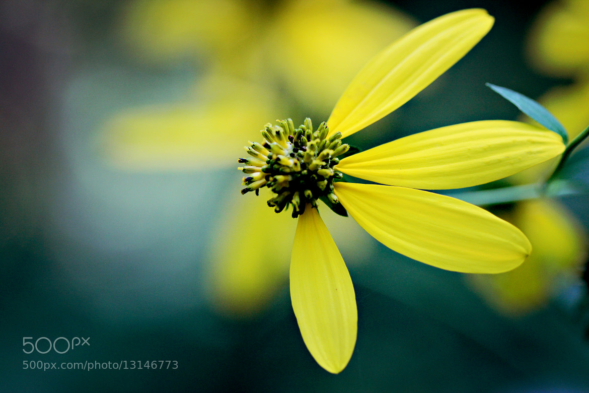 Photograph Cheer Up by Jean Loper Photography on 500px