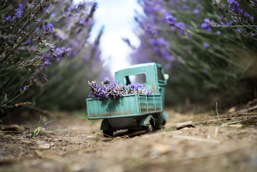 Lavender Delivery in Hitchin by Kim Leuenberger on 500px.com