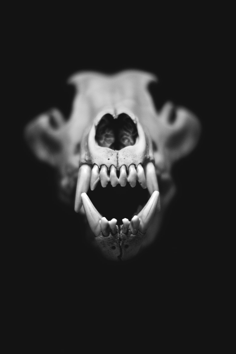 Photograph Wolf Scull  by Amo N on 500px