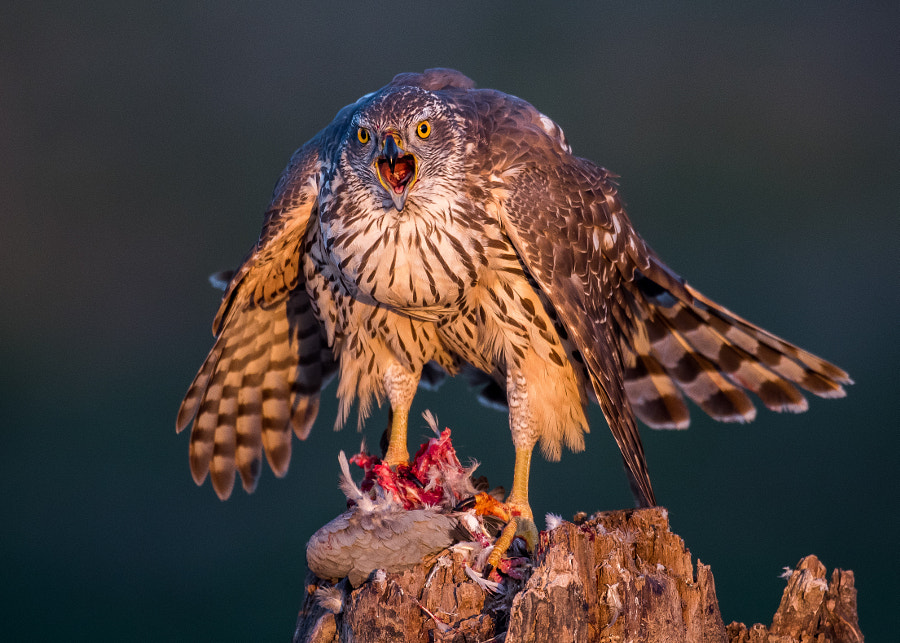What are you looking? by Gorazd Golob on 500px.com