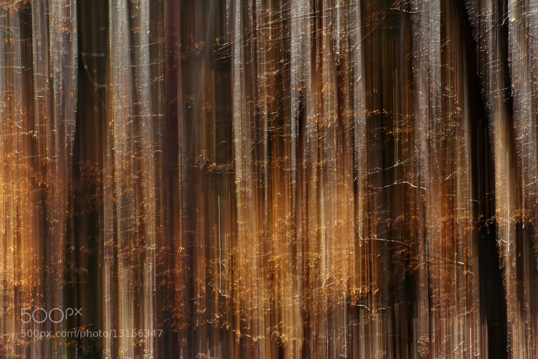Photograph backlight by Michaela Wendland on 500px