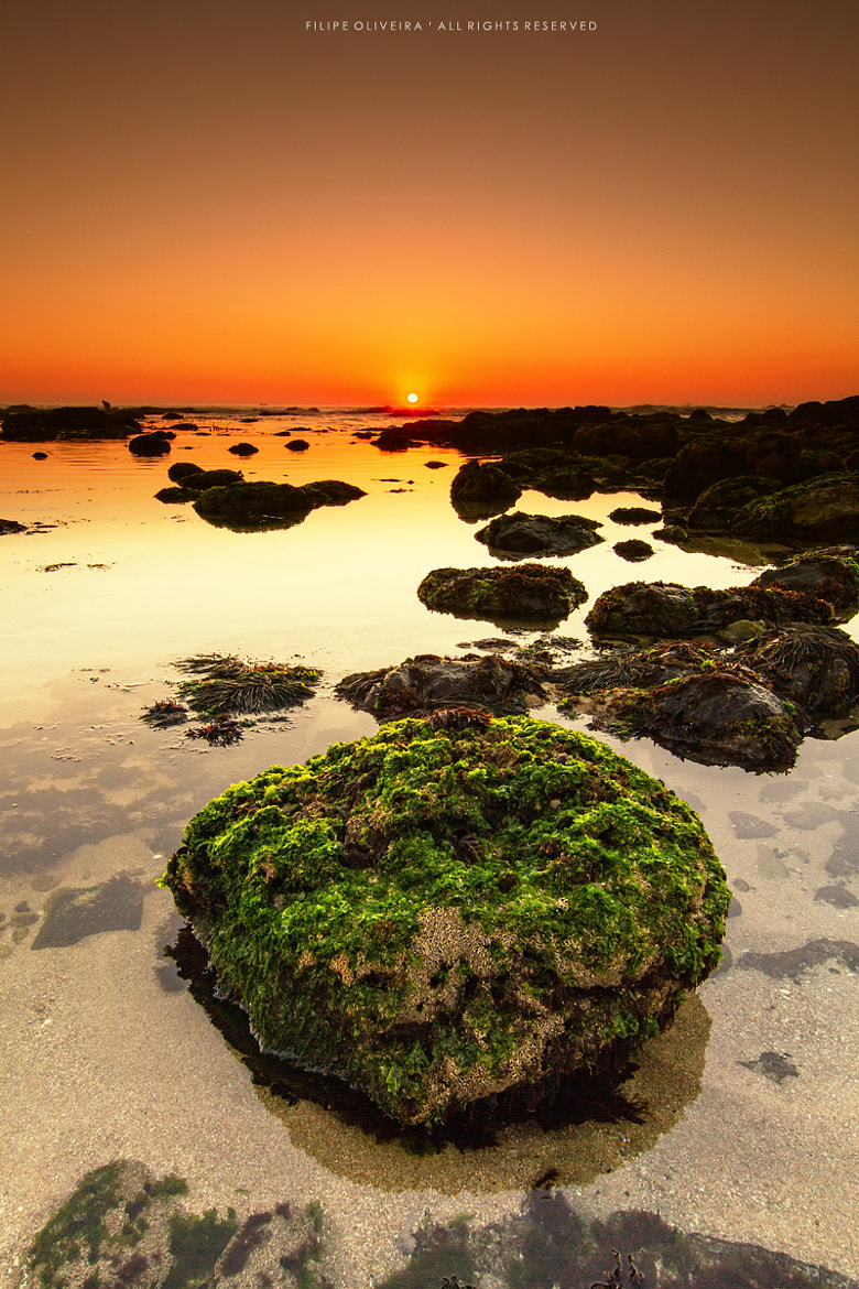 Photograph Sunset over green by Filipe Oliveira on 500px
