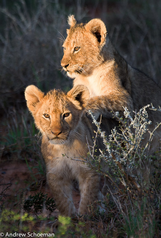 Photograph Little Friends! by Andrew Schoeman on 500px