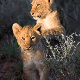 Little Friends! by Andrew Schoeman (andrewschoeman)) on 500px.com