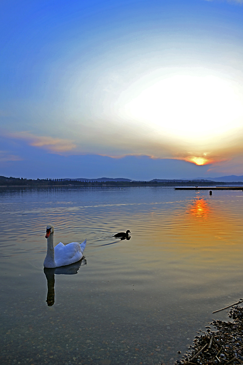 Photograph sunset on swan by Salvatore Smario on 500px