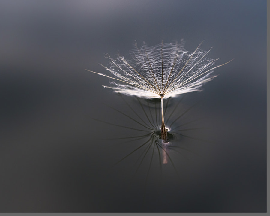floating seed