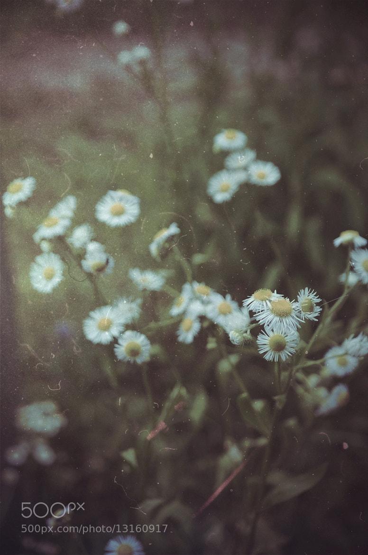 Photograph Untitled by Nata Kotovskaya on 500px