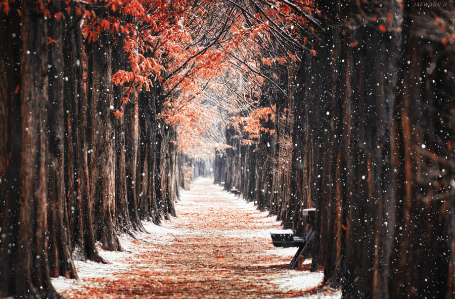 First Snow by Jaewoon U on 500px.com