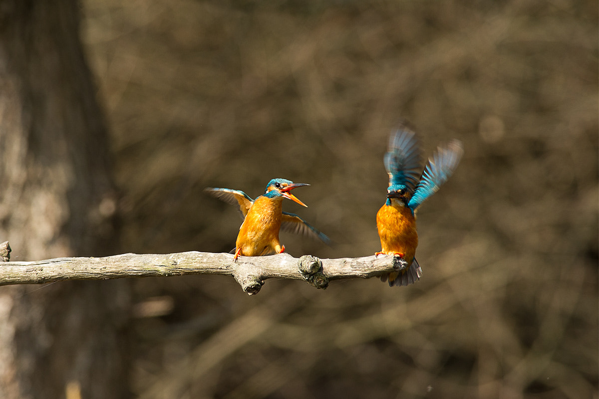Photograph family arguments by Gianluca Schivo on 500px