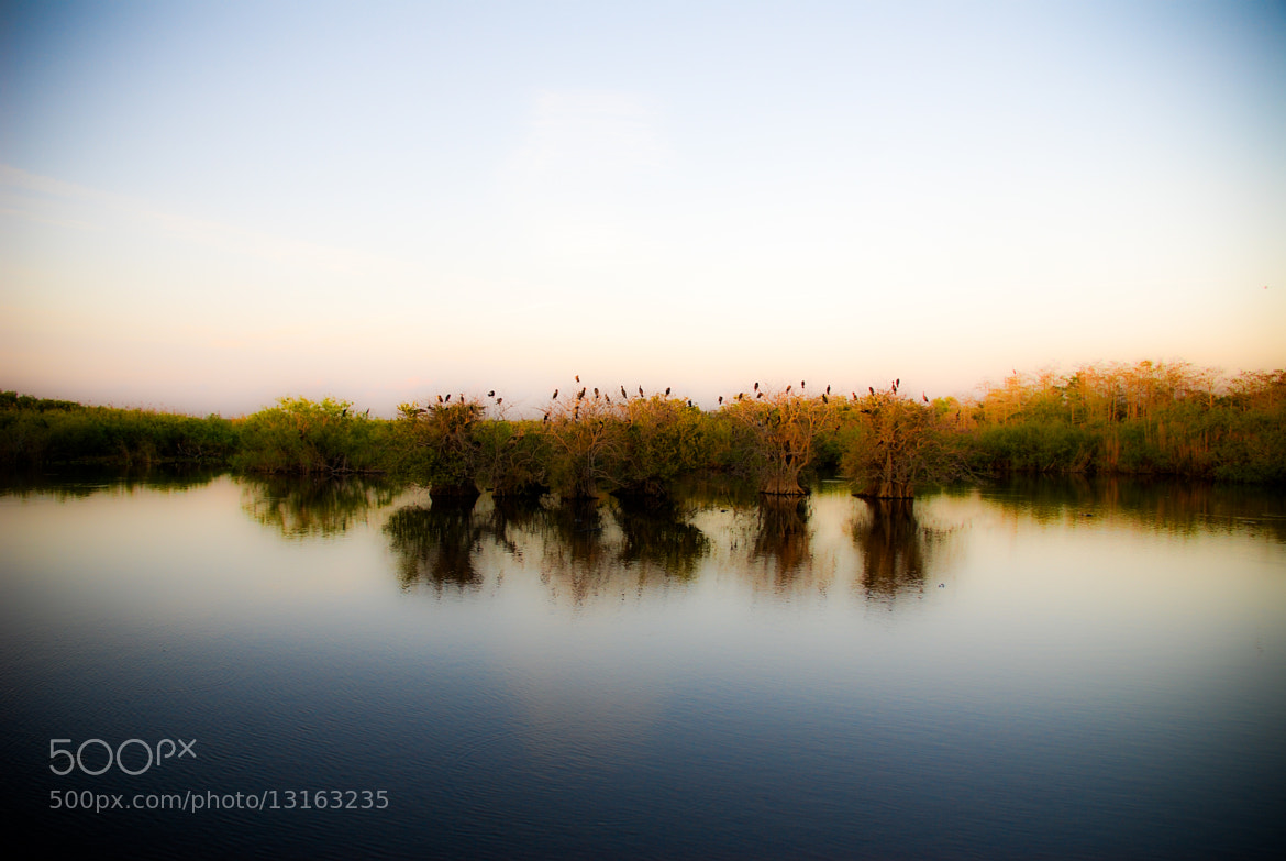 Photograph Everglades National Park (soft focus)  by Brendan Lilly on 500px