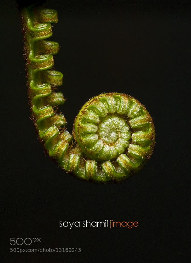 Photograph I am Fern Lover by Saya Shamil on 500px