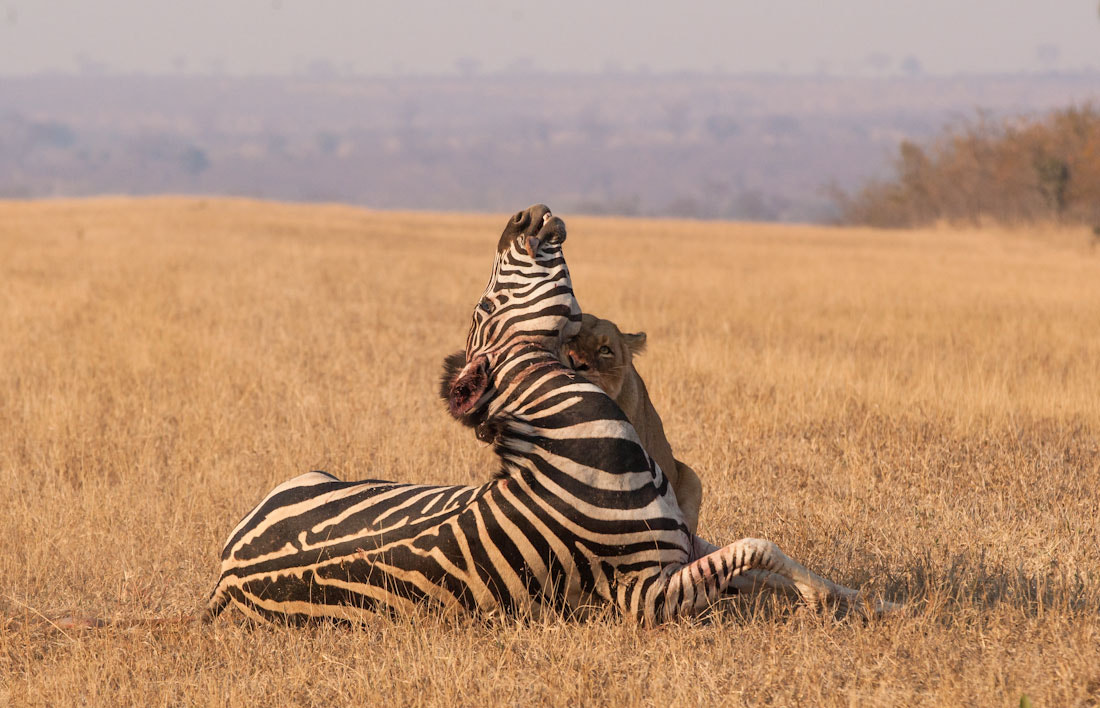 Photograph One Life for Another by Marlon du Toit on 500px