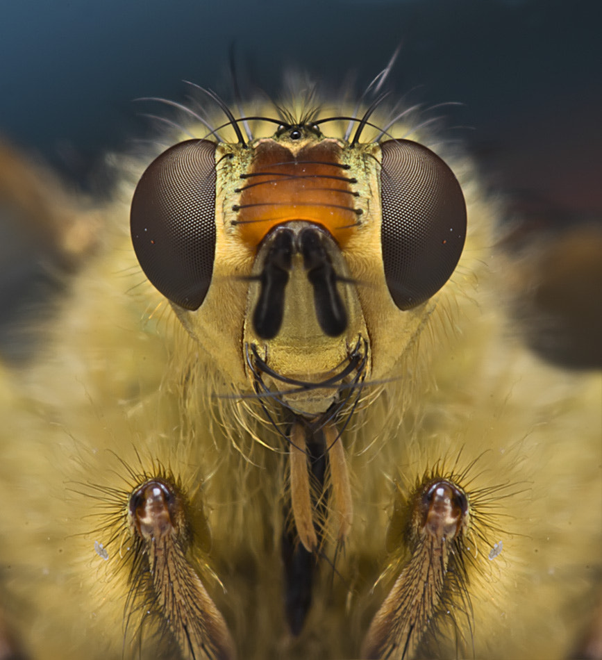 Photograph Fly handsome by Omid Golzar on 500px