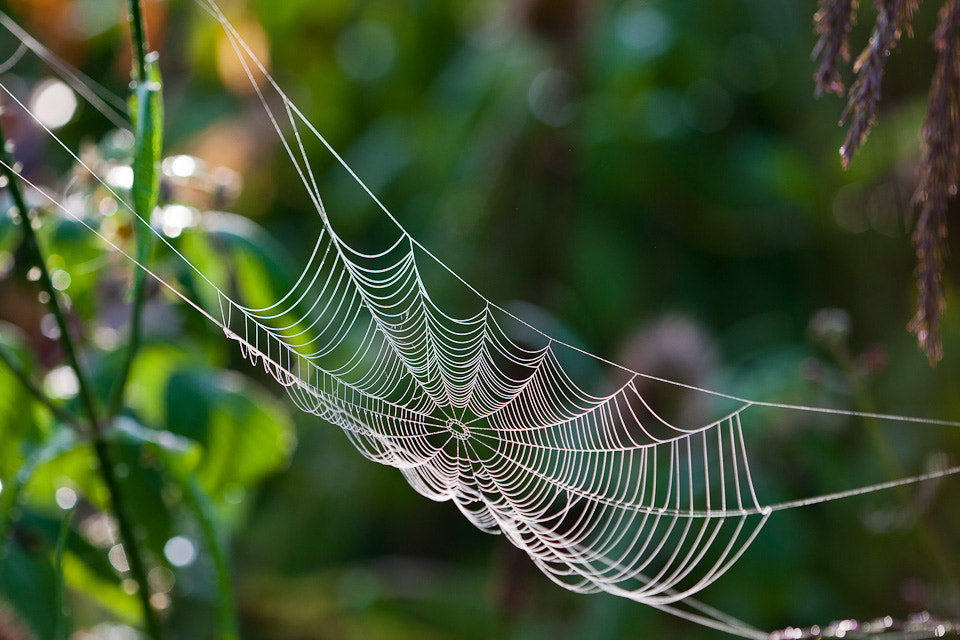 Photograph Spiders hammock by Richard Loader on 500px