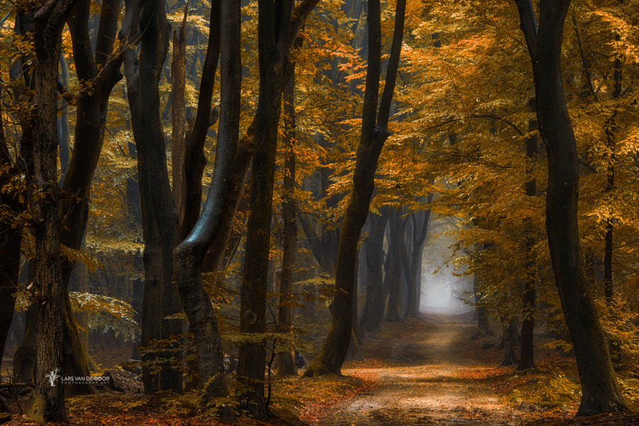 Speuldimensions by Lars van de Goor on 500px.com