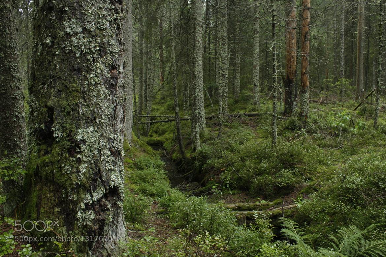 Photograph Forest @ Etang de Gruère by Stephan Scherz on 500px