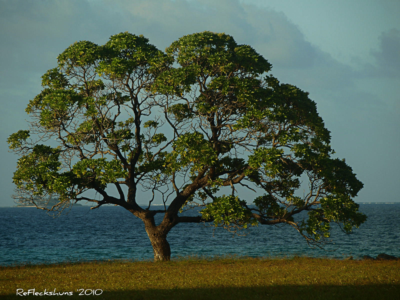 Photograph Kwaj Tree by Stuart Fleck on 500px