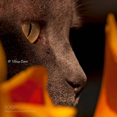 Photograph like a panther by Vilma Corvi on 500px