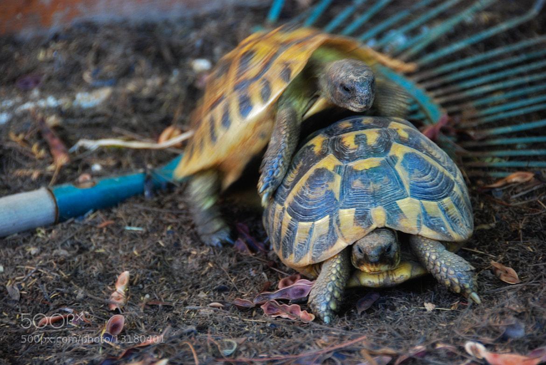 Photograph Sex Turtle by Jean Luc Julien on 500px