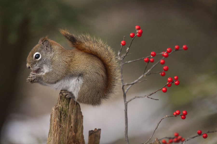 To wait for winter by Andre Villeneuve on 500px