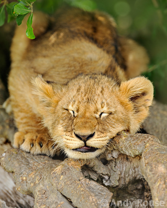 Photograph Sleeping Beauty by Andy Rouse on 500px