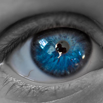 eyes of blue, Canon EOS REBEL T3, EF100mm f/2.8 Macro USM