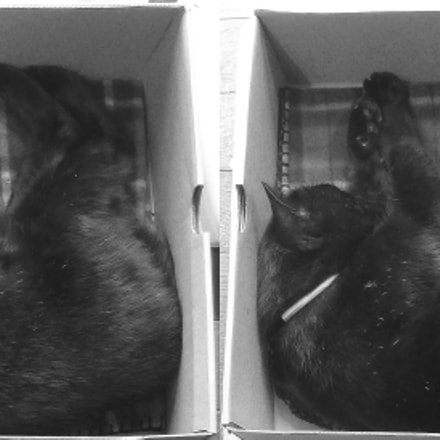Black Cat STEREO (cross-eyed-viewing), Panasonic DMC-3D1