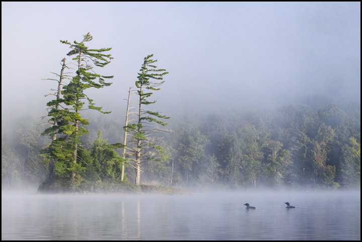 Photograph In the Mist by Chris Kayler on 500px