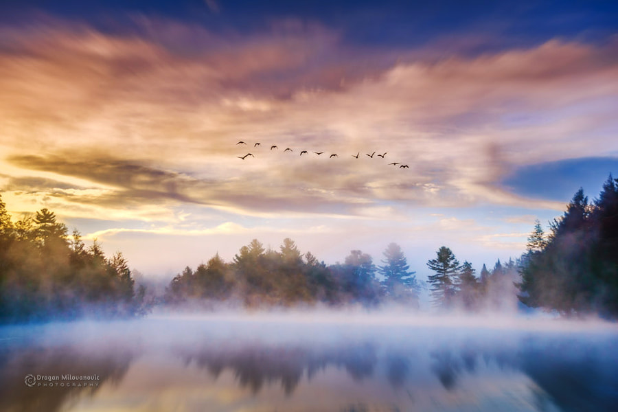 Foggy morning by Dragan Milovanovic photography on 500px.com