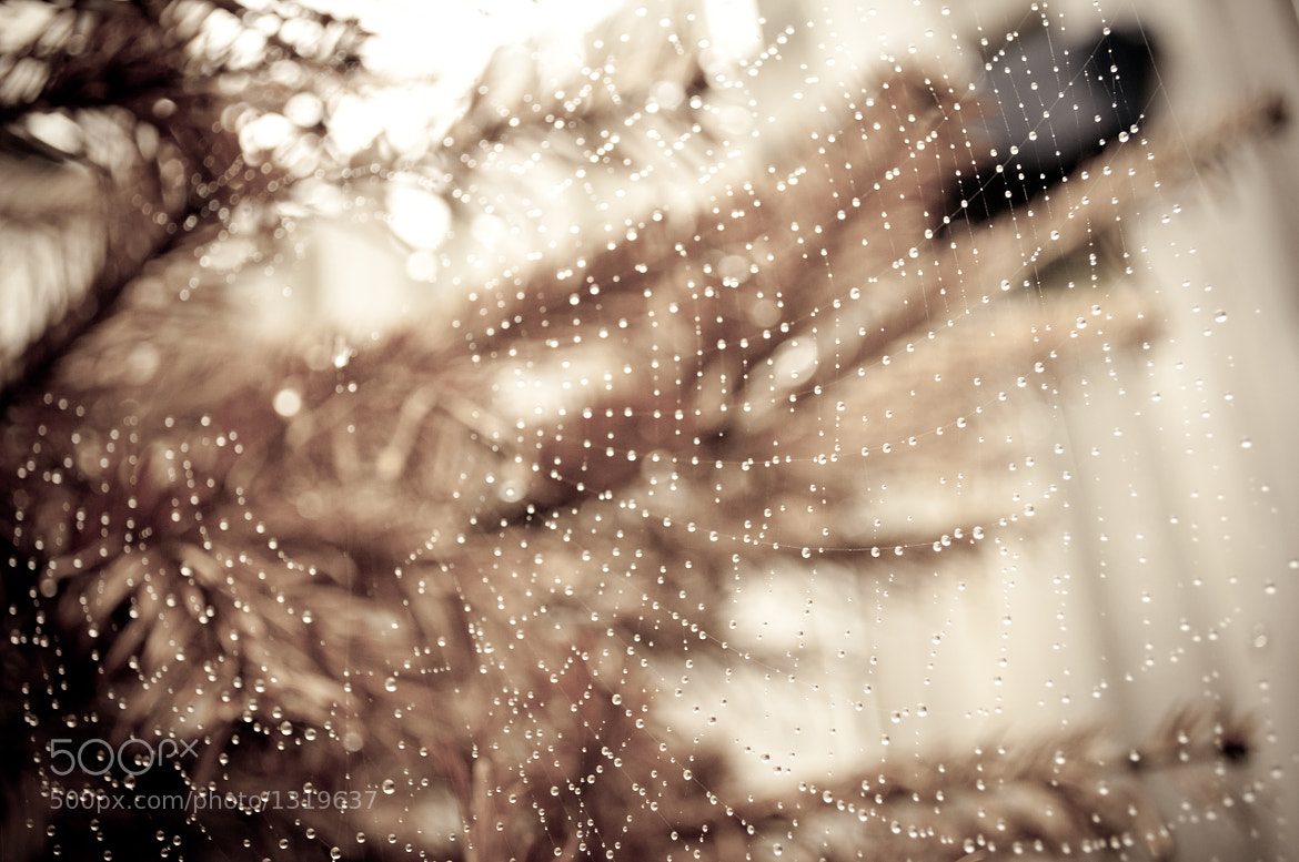 Photograph After the rain 2 by Glafira Kushnir on 500px