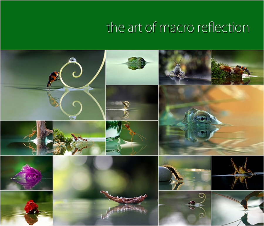 Photograph The Art of Macro Reflection by teguh santosa on 500px