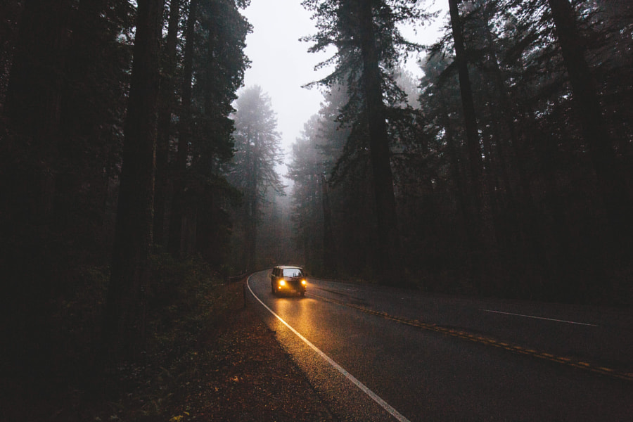 Moody Redwood drives