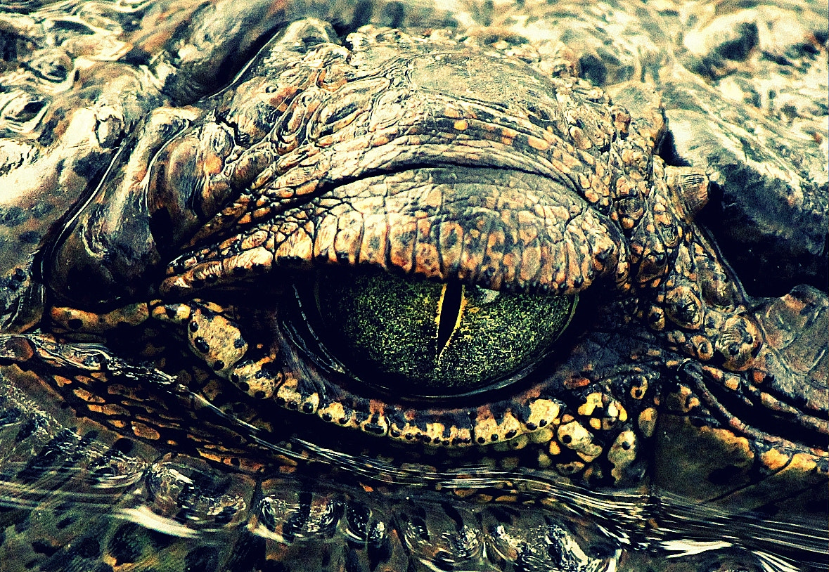 Photograph Eye by N J on 500px