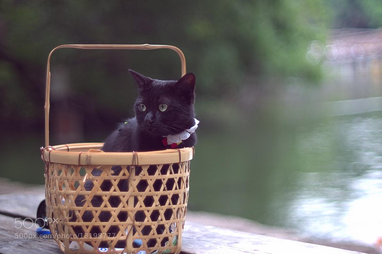 Photograph portable cat by takashi kitajima on 500px