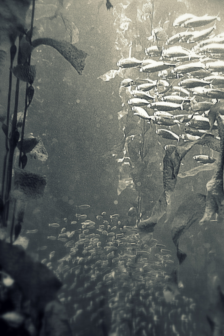Photograph Fish schools by Flore Y on 500px