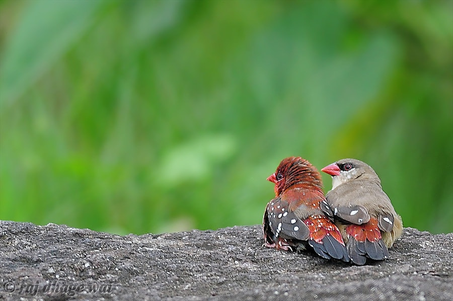 Photograph love and togetherness by Raj Dhage on 500px