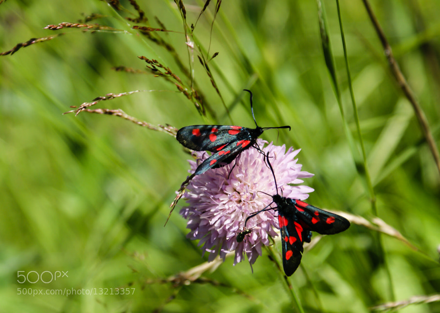 Photograph Black & Red by Georgia Mizuleva on 500px