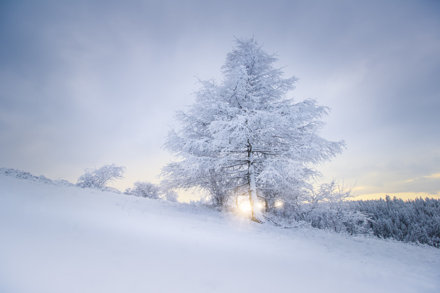 Tree in winter by Marek Kopnický on 500px.com