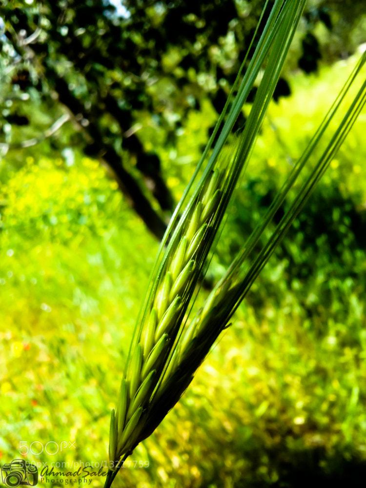 Photograph Nature by Ahmad Salem on 500px