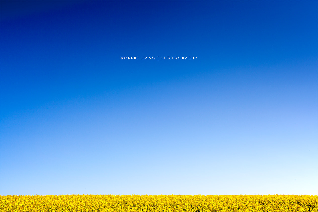 Photograph Canola fields, Eyre Peninsula, Australia by Robert Lang on 500px