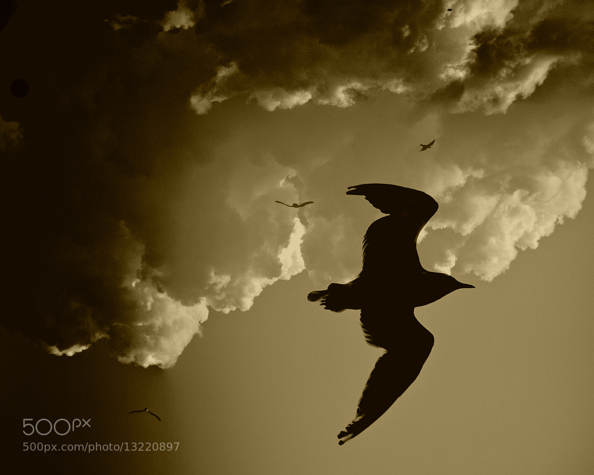 Photograph always spread your wings... by Leila Raymond on 500px