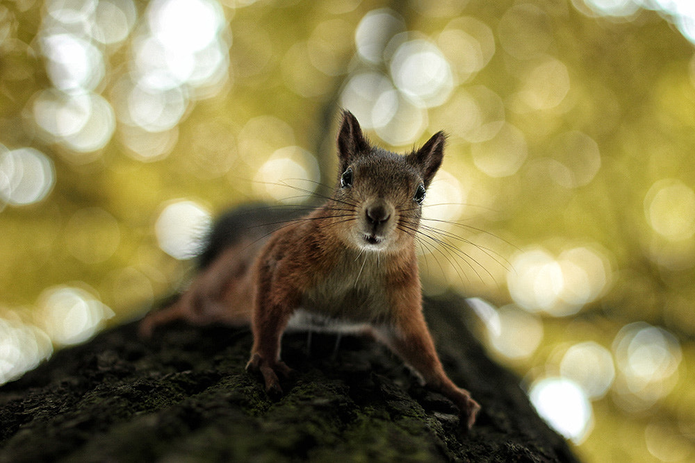 Photograph squirrel by Артём Воронин on 500px