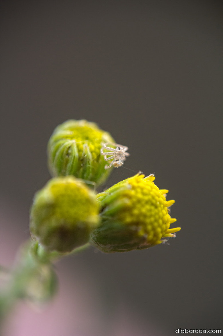 Photograph  2mm by Diana Barocsi on 500px