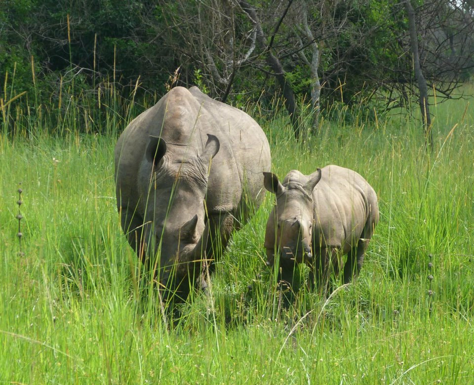 Photograph rhinos by Albrieux  Africa Tours on 500px
