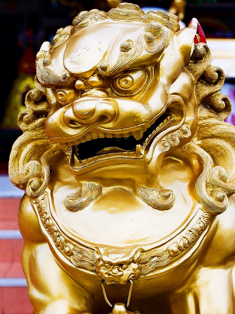 Photograph Lion  by Siripong Travels on 500px