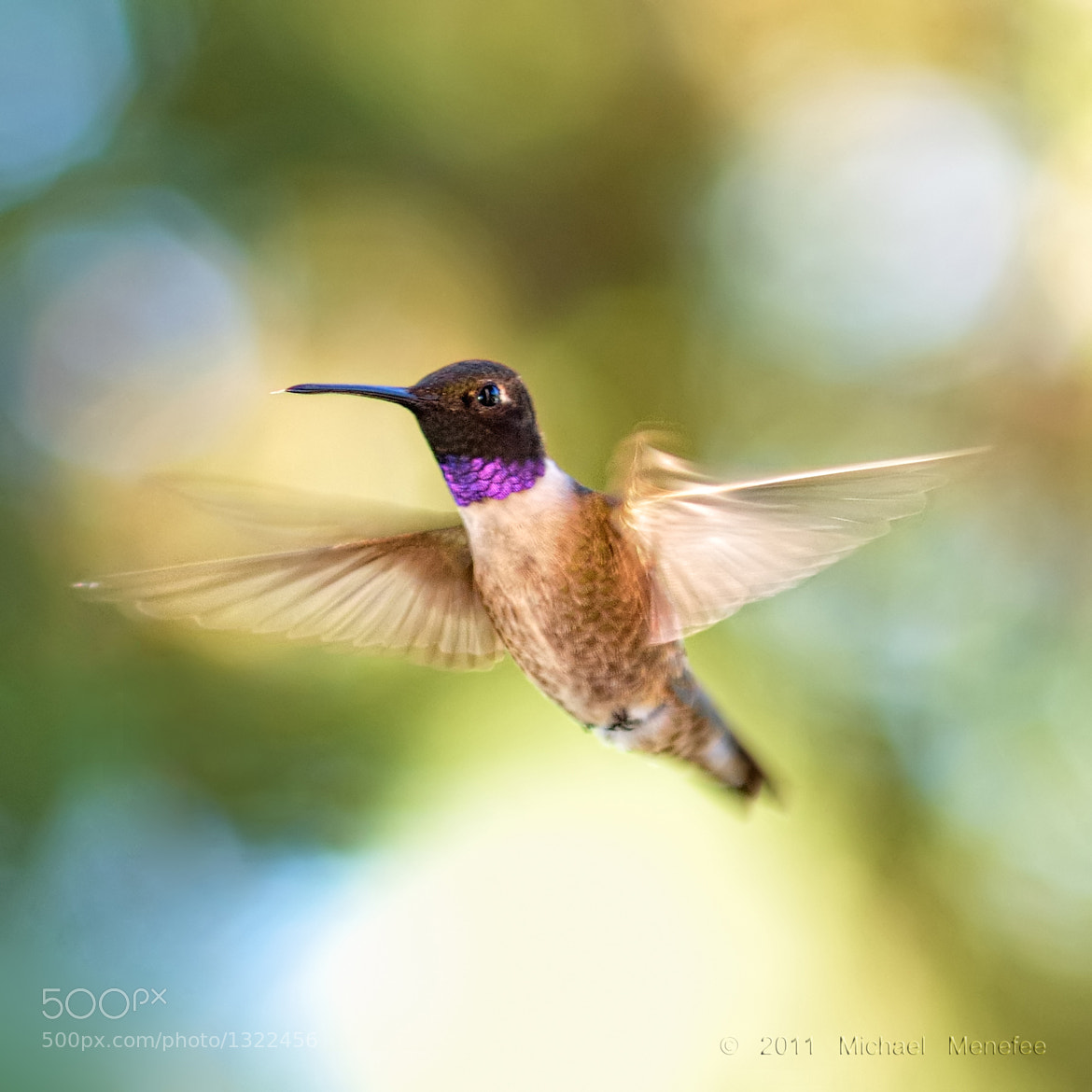 Photograph Flying Nectar Faery by Michael Menefee on 500px