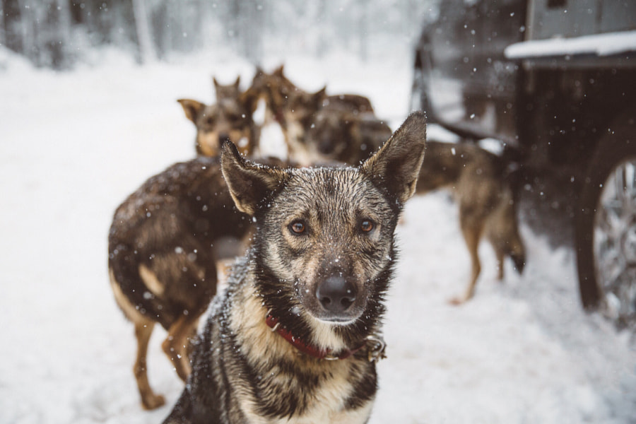 Leader of the pack by Bryan Daugherty on 500px.com