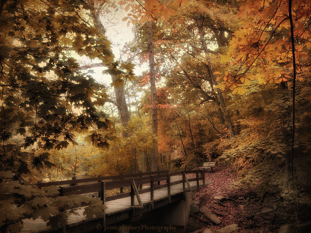 Photograph Autumn Crossing by Jessica Jenney on 500px