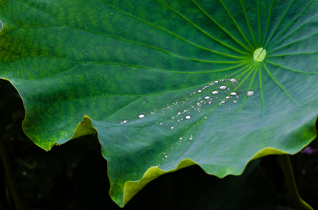 Photograph Leaf After Rain by Wilson Li on 500px